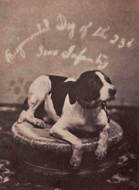 "Pearson's well-known photo of ""Doc,"" courtesy Ross McClintock"