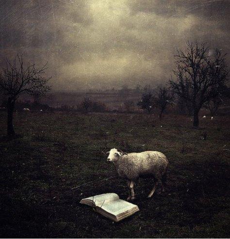 artistic-surreal-photomanipulation-by-sarolta-ban-33