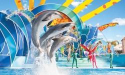 SeaWorld San Diego, il divertentissimo spettacolo dei delfini