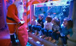 Un magico Natale ecologico a Lido di Jesolo SEA LIFE Aquarium