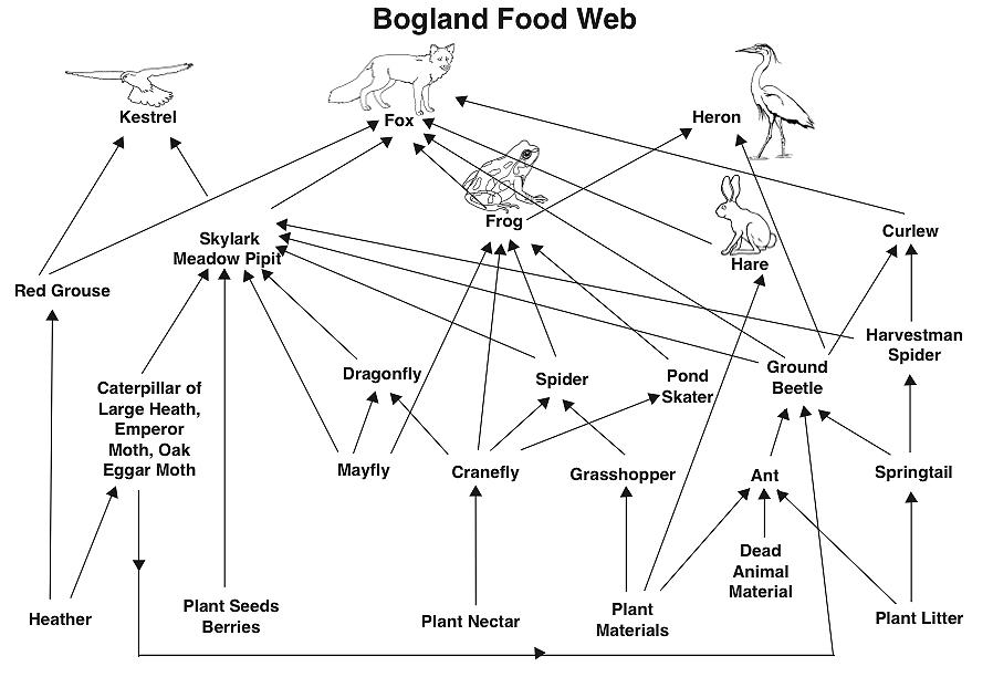 Bogland Food WebIrish Peatland Conservation Council