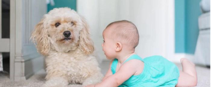 Cercasi cane per bebè - IperBimbo