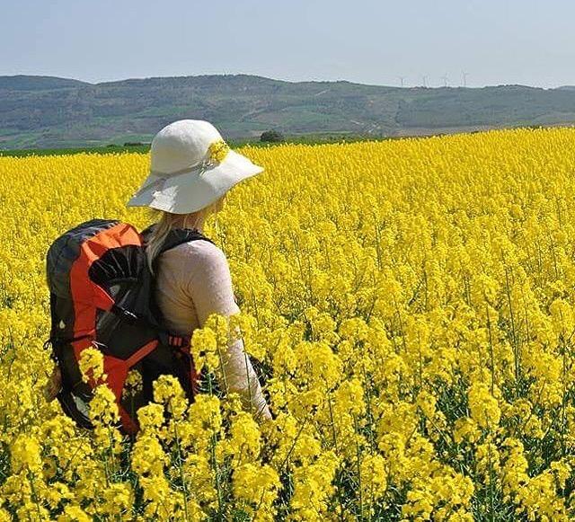 Camino de Santiago en primavera