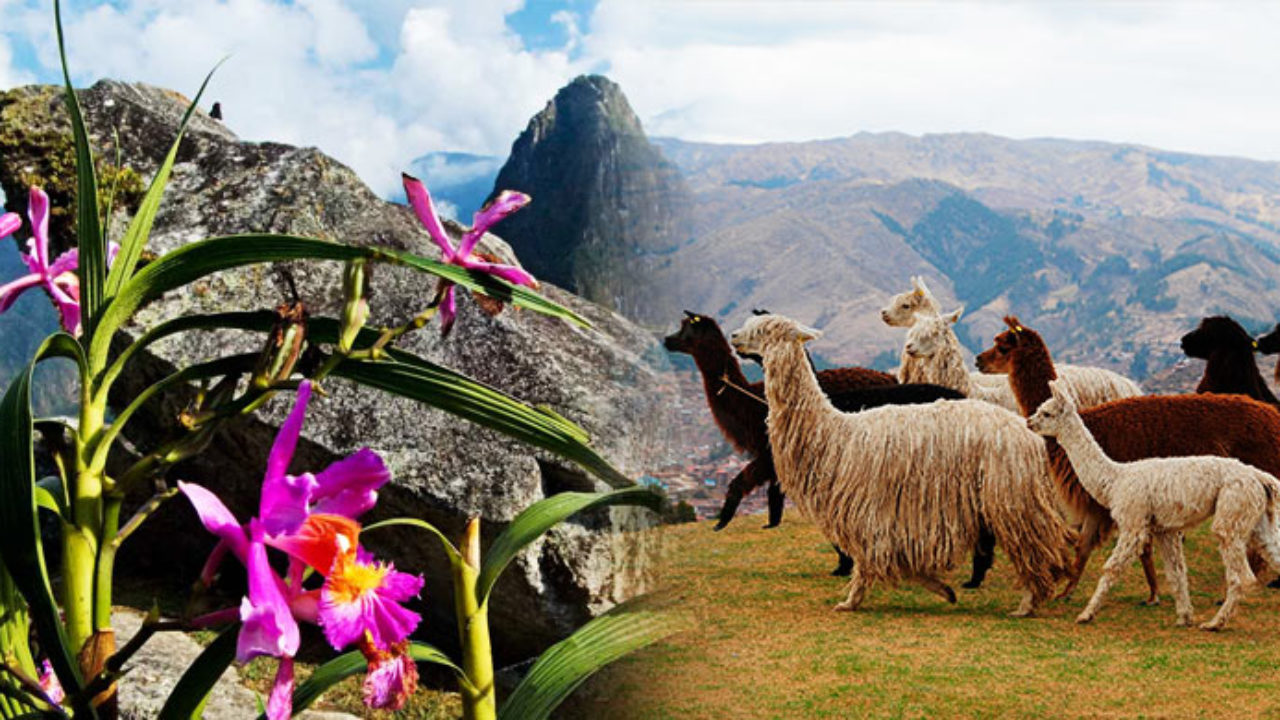 Flora y Fauna de Cusco, biodiversidad de Cusco y Machu Picchu