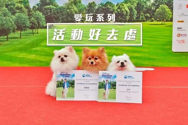 [慈善活動] 香港愛護動物協會 X「全城狗狗行善日2019」年度籌款活動 - iPlayHK 香港愛玩生 | 地道香港旅遊好去處