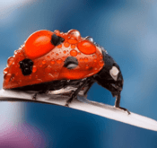 Beautiful Insect Wallpapers & Pictures