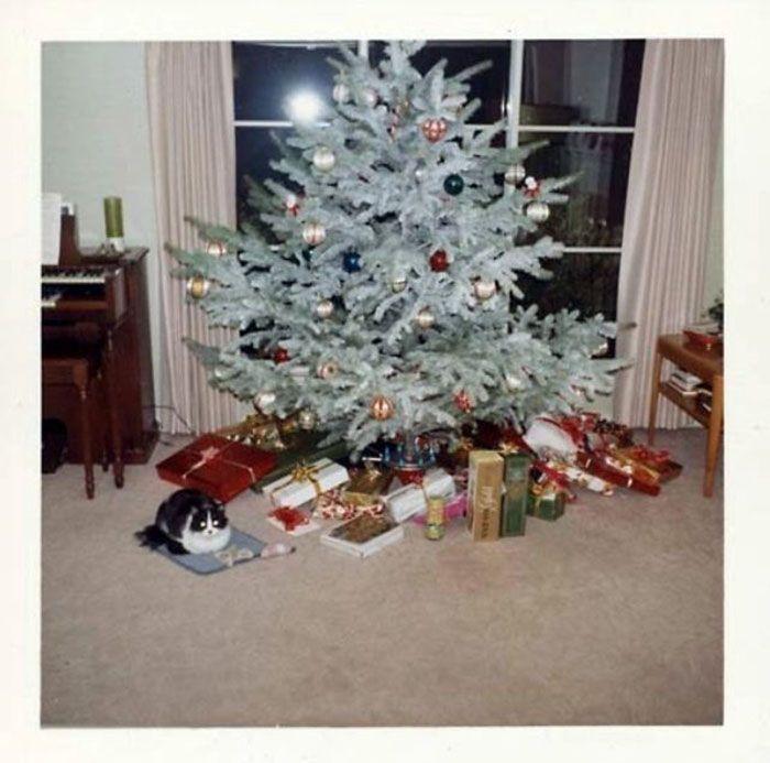 L E D Christmas Lights