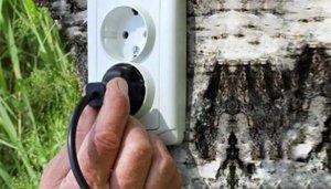 Crean novedosa energía alternativa electricidad de las plantas