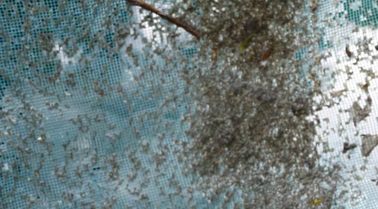 Intervienen vivienda con piscina minada de larvas