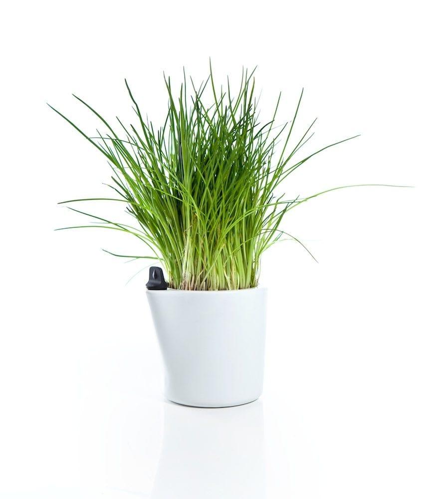 SelfWatering Flower Pots  IPPINKA