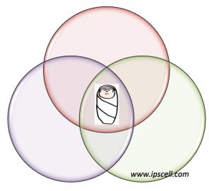 3-parent baby