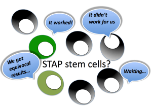 STAP stem cells