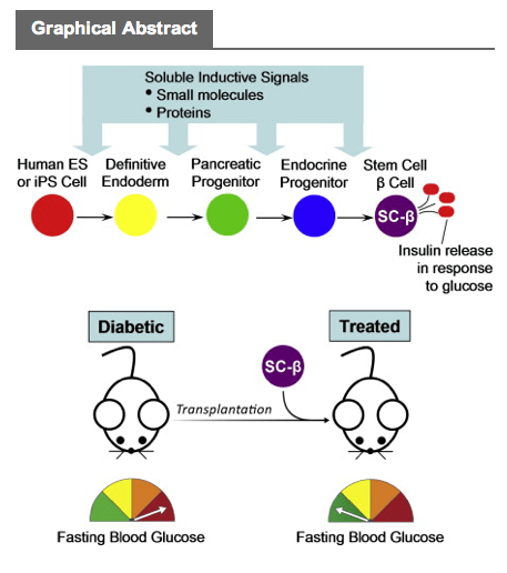 Top 10 Takeaways From Harvard Stem Cell Diabetes Paper The Niche