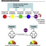 Top 10 Takeaways From Harvard Stem Cell Diabetes Paper