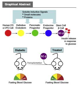 Harvard stem cells Diabetes