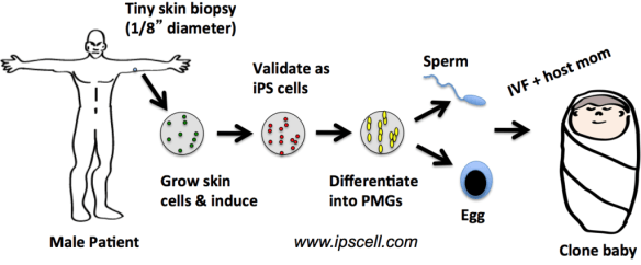 IPS cell cloning