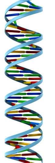 DNA helix isolated