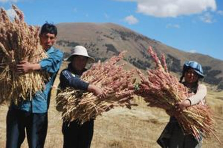 Cortesía de la FAO Perú