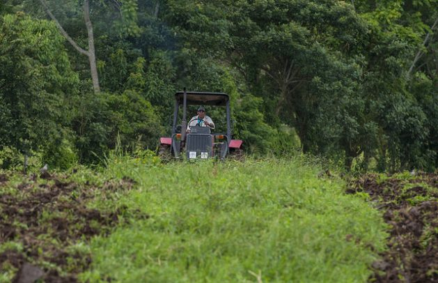 A good winter or rainy season this year in the tropical areas in northern Nicaragua curbed migration towards the neighbouring Northern Caribbean Region by farmers who use the slash-and-burn method, devastating to the forests. Credit: Wilmer López/IPS