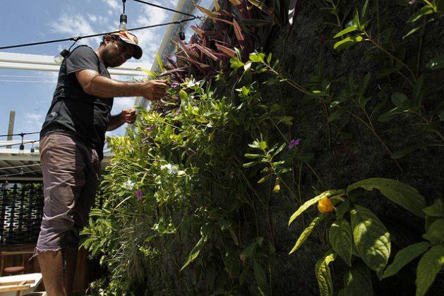 Rai García, uno de los dos socios fundadores de la empresa ecológica Arbio, especializada en el diseño, ejecución y mantenimiento de ecosistemas verticales, atiende un jardín en construcción ubicado en el interior del proyecto cultural Fabrica de Arte cubano, en La Habana, en Cuba. Crédito: Jorge Luis Baños/IPS