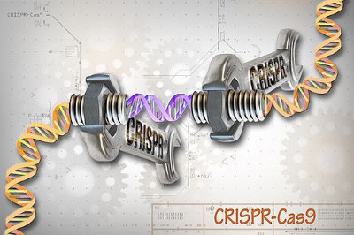 """""""CRISPR/Cas9 Editing of the Genome"""" by National Human Genome Research Institute (NHGRI). Licensed under CC BY 2.0."""