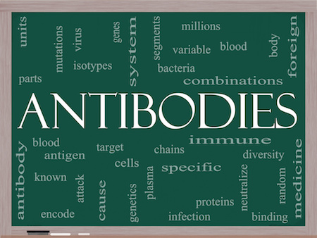 Patenting Antibodies: Obviousness Considerations