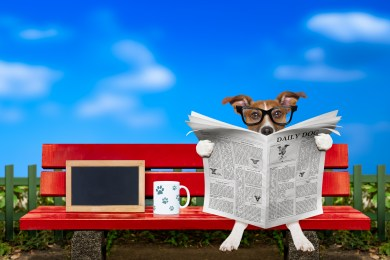 https://depositphotos.com/182060190/stock-photo-dog-reading-newspaper-on-a.html