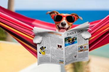 Bites - https://depositphotos.com/99956332/stock-photo-dog-on-hammock-in-summer.html