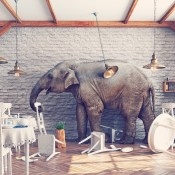 https://depositphotos.com/88648926/stock-photo-the-elephant-in-a-restaurant.html