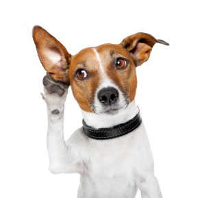 https://depositphotos.com/14094278/stock-photo-dog-listening-with-big-ear.html
