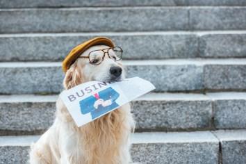 https://depositphotos.com/220243566/stock-photo-retriever-dog-cap-eyeglasses-holding.html