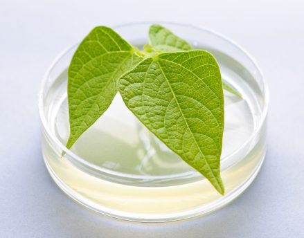 Patent Protection for Plants - https://depositphotos.com/6696935/stock-photo-gm-plant-in-petri-dish.html