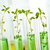 https://depositphotos.com/68706489/stock-photo-laboratory-analysis-of-plant.html