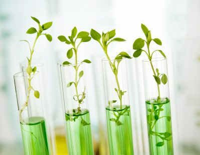Sustainable Chemistry Research and Development Act - https://depositphotos.com/68706489/stock-photo-laboratory-analysis-of-plant.html