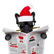 https://depositphotos.com/170496978/stock-photo-dog-reading-newspaper-on-christmas.html