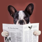 https://depositphotos.com/58564665/stock-photo-french-bulldog-reading-newspaper.html