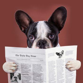 https://depositphotos.com/58564665/stock-photo-french-bulldog-reading-newspaper.html
