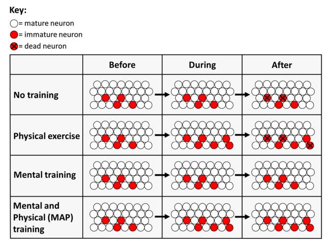 map training for brain