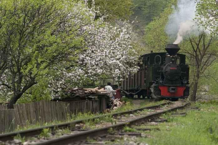 Mocănița-de-la-Vișeul-de-Sus-a-venit-cu-primăvara