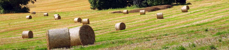 ird duhallow farming