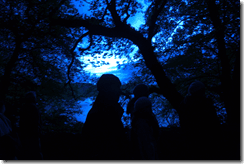 National Dawn Chorus Day: listening for birdsong in the pre-dawn light