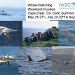 2012 Summer Whale Watching Courses from the IWDG