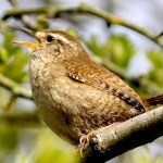 Birding for Beginners: getting to know your local birds