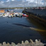 Baltimore whale stranding: a good news story?