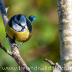 Birding for Beginners: why watch birds?