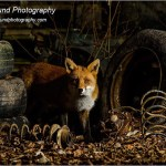 Wildlife Portfolio: Phil Pound