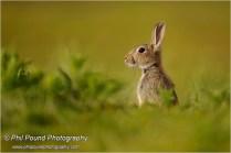 Lonesome Rabbit, Barley Cove