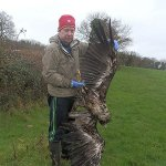 Ireland's first white-tailed eagle fledgling shot dead in Tipparary