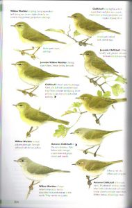 Warblers: The Helm Guide to Bird Identification