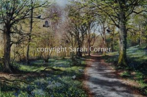 Path through the bluebell woods
